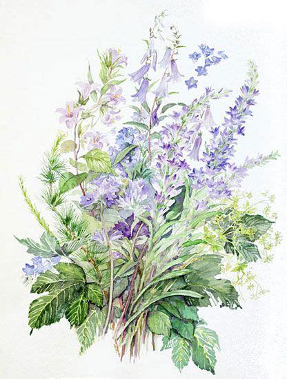 acquarelli fiori acquerelli botanici acquarelli di fiori tuninetti