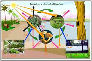 Are non living components of the environment and are called abiotic