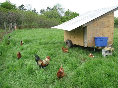 Mobile Chicken Shed by 30 Awesome Custom Chicken Coop Ideas And Diy Plans Photos