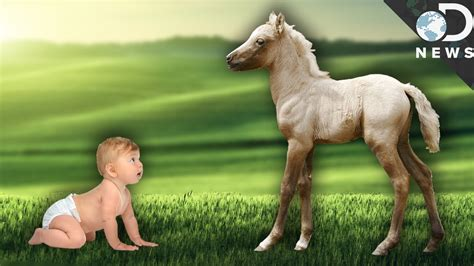 new year animal born 2010 why can newborn animals walk but we can t