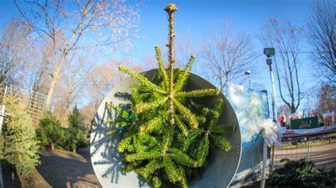 weihnachtsbaum preise gute nachricht zum preise f 252 r weihnachtsb 228 ume
