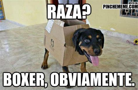 imagenes perra mal agradecida lucho perros memes y mascotas full imagenes taringa