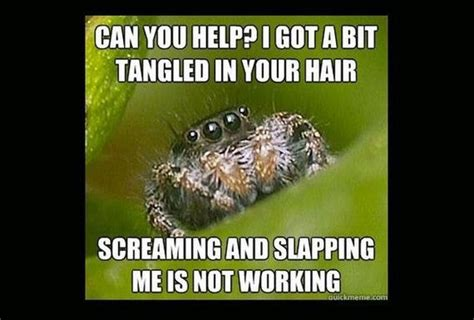 Misunderstood Spider Meme - 25 best ideas about spider meme on pinterest funny