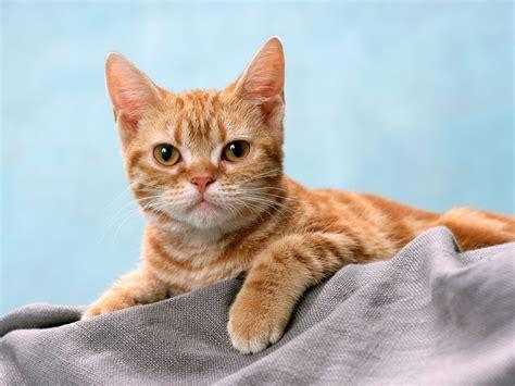 imagenes sarcasticas de gatos gatitos muy tiernos hd recomendado im 225 genes taringa