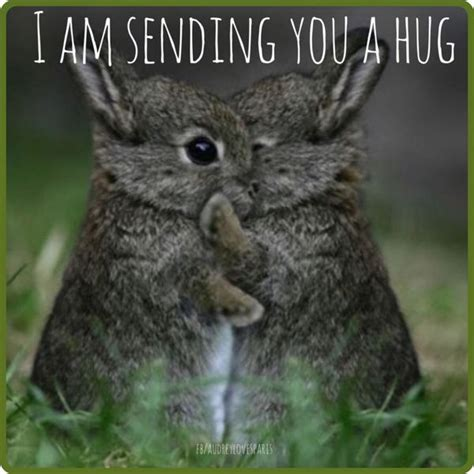 best hugs hug memes best hug pictures