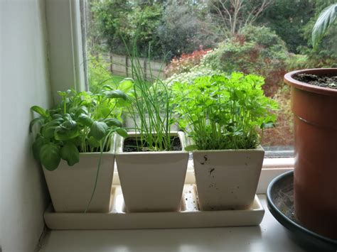 Window Sill Herb Garden Designs Garden Pots The Best Manufacturers And