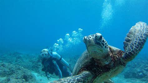 scuba diving scuba diving with dolphins