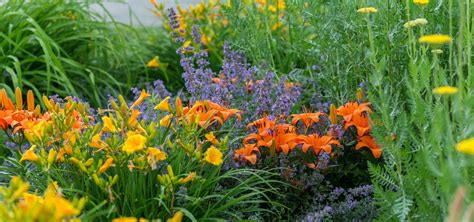 sustainable perennial garden phipps conservatory and