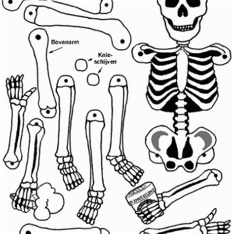 human anatomy nose coloring pages bulk color coloring page pin human brain coloring pages on pinterest