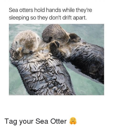 Sea Otter Meme - 25 best memes about otters holding hands otters holding