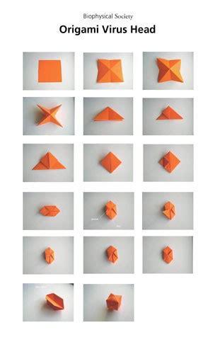 Virus Origami - virus origami biophysicalsociety