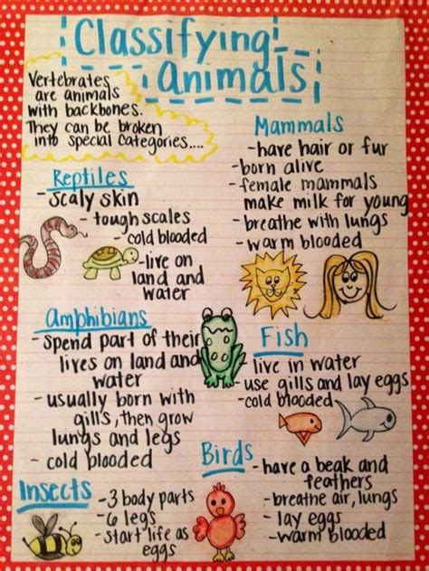 i mammal the story of what makes us mammals books the animal classification anchor chart i made for my