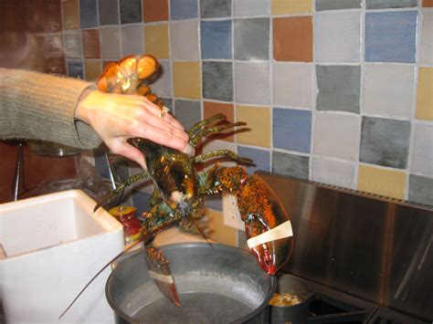 boiled lobster cooking time