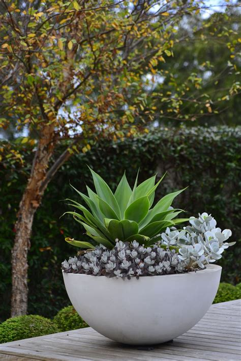 best 25 large garden pots ideas on outdoor
