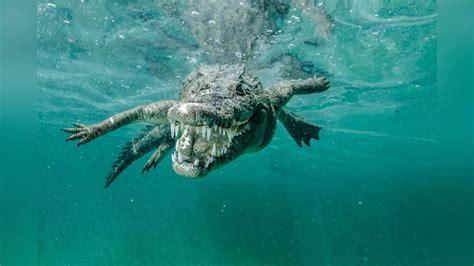 imagenes mujeres nadando 10 animales acuaticos mas peligrosos del mundo youtube