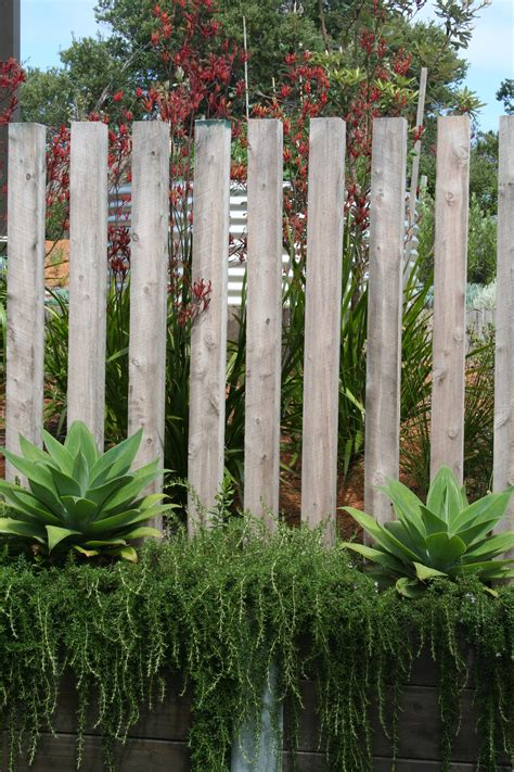 Landscape Timbers For Fence Posts Coastal Garden Swan Neck Agave With Prostrate Rosemary