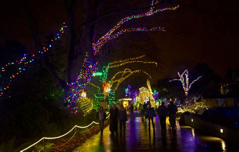 wild lights woodland park zoo