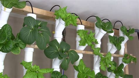 replaced    pvc vertical hydroponic setup
