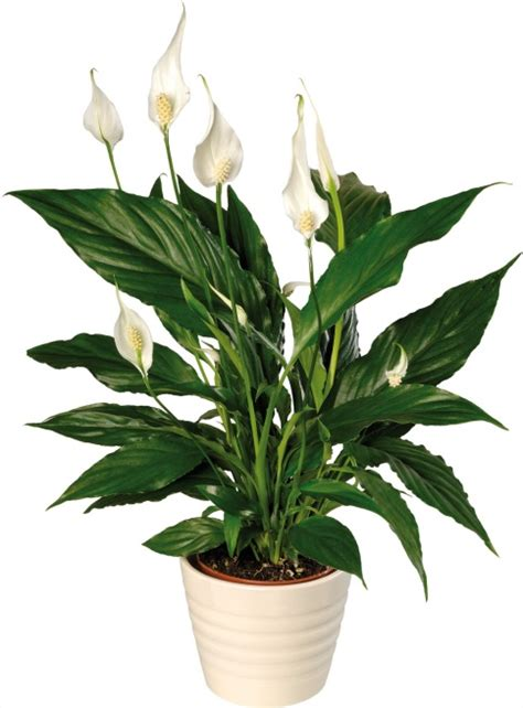 easy indoor plants diy desktop garden easy care indoor plants to get you