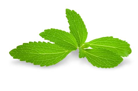 Plante De Stevia by Stevia Sweetleaf Stevia 174 Sweetener Stevia