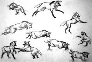 maned wolf pencil studies by deathscent on deviantart