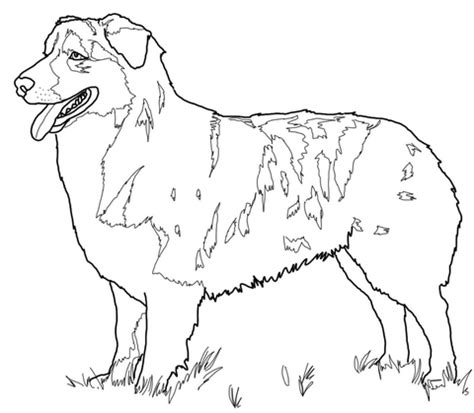 australian shepherd coloring page supercoloring com