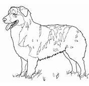 Australian Shepherd Coloring Page  SuperColoringcom