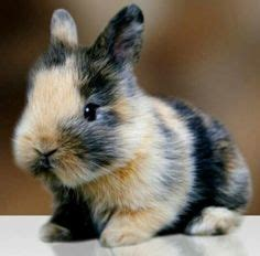 baby bunny on pinterest baby bunnies bunnies and happy pictures