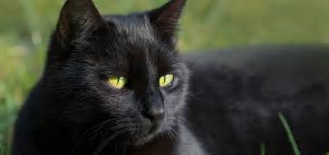 black cat black cat day 27th oct 2016 days of the year