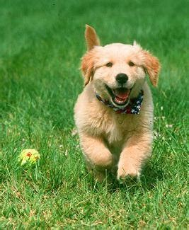 where to find free puppies free dogs free puppies find free dogs a humane approach to tackle