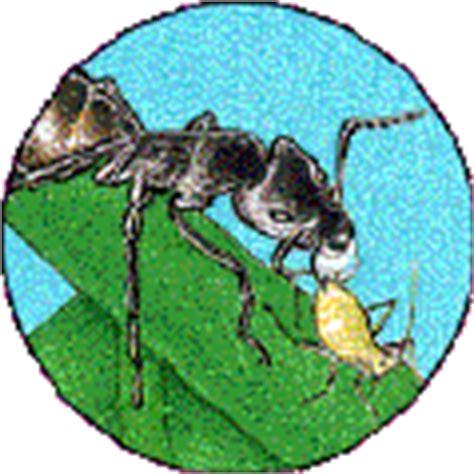 tuin een grote mieren nest mieren bestrijden weren biologisch verdelgen huis en tuin
