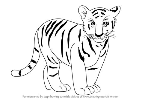Drawing Zoo Animals by Tiger Drawing Pictures At Getdrawings Free For