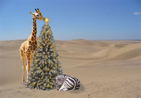 christmas  year safaris  africa  origins safaris origins safaris