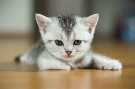 cat friendly moving aussie aussie and