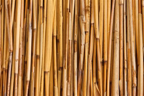 bamboo pattern texture bamboo texture free stock photo public domain pictures