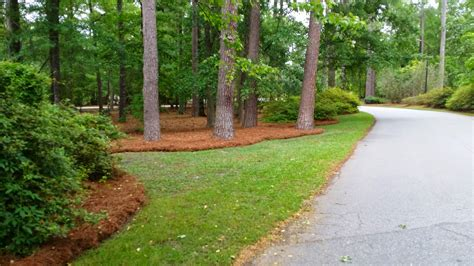 pines landscaping commercial pine straw installation landscaping services