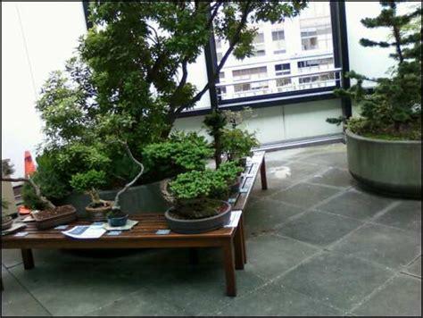 adventures in your own backyard bonsai adventures in your own backyard pictures