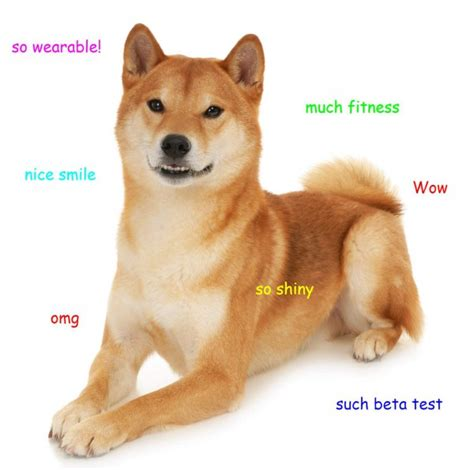 What Breed Is Doge Meme - sign up now to beta test a dog wearable device with