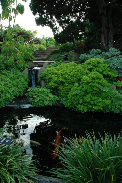 koi pond and waterfall in the self