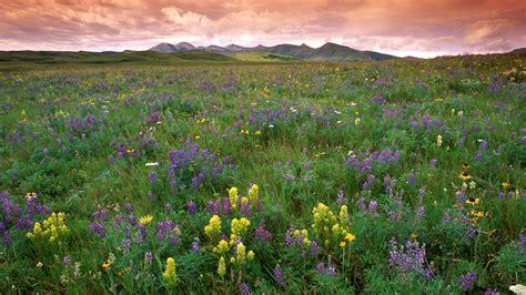 what is a prairie prairie background 32998 1920x1080 px hdwallsource