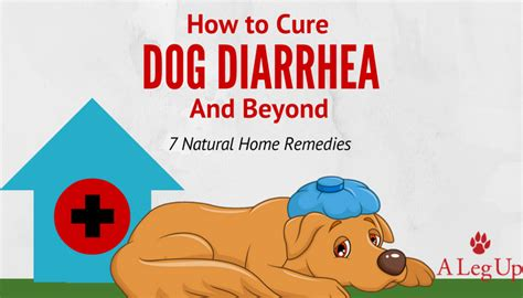 cure puppy diarrhea how to cure diarrhea beyond 7 home remedies posts alegup