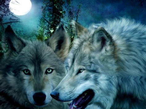 wolf s wolf wallpaper yorkshire rose wallpaper 30359260 fanpop