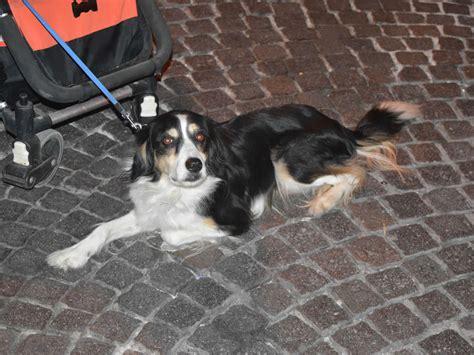 dati nazionale anagrafe canina anagrafe degli animali d affezione tesoriaquattroze