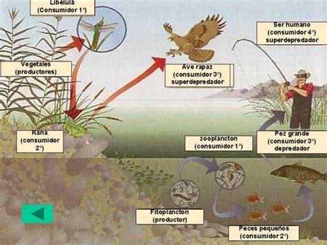 cadenas troficas en ecosistemas cadenas troficas trini