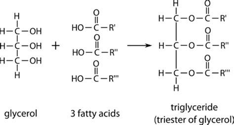 triglyceride molecule diagram 14 2 lipids and triglycerides chemistry libretexts