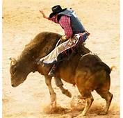 Bull Riding School Atlanta  Cloud 9 Living