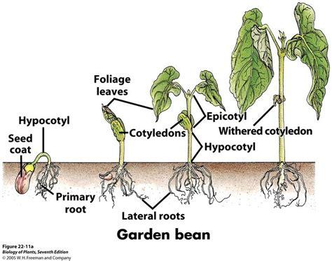 images  wampanoag  pinterest gardens