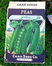vintage  store stock peas seed box