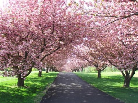 3302 cherry tree circle maples tree lined driveway search our home driveway front yard tree
