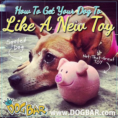 how to get an to like a puppy how to get your to like a new the bar